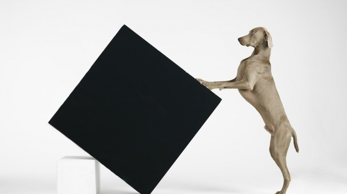 "William Wegman ""Being Human"" al Museo d'arte della Svizzera italiana"