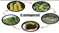 From food to compost